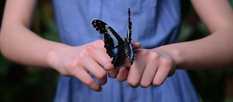 Kinder erfassen Inhalte mit allen Sinnen - auch beim Insektensterben lernen sie am besten, wenn sie selbst aktiv werden können.